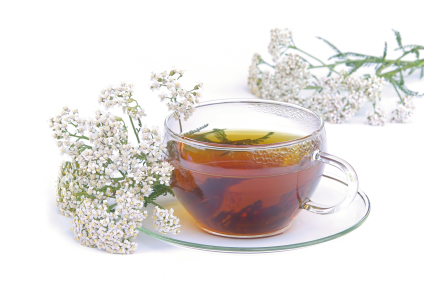 Tee Schafgarbe - tea yarrow 02